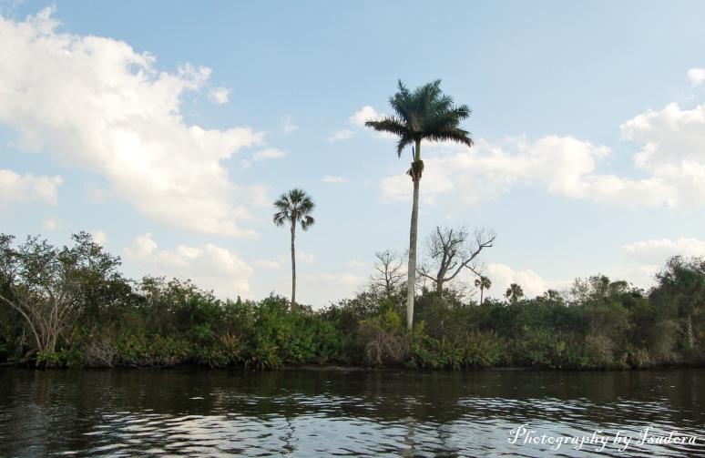 Single Palm Tree Peace River - reflection - web