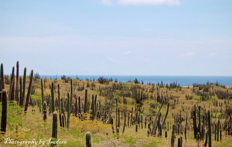 Cactus Field web signed