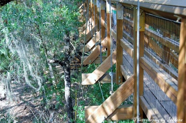 Canopy-Bridge---side-view-w