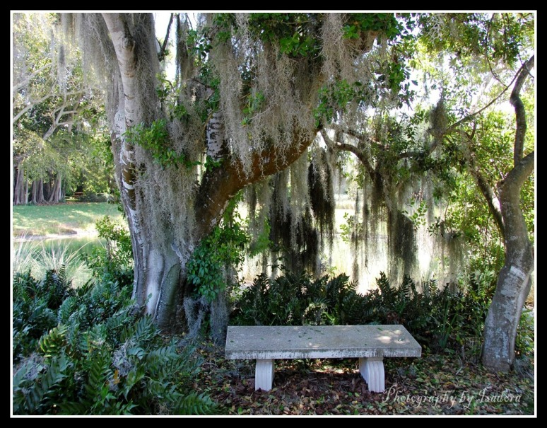 Bench---Peaceful--(2)-web-signed