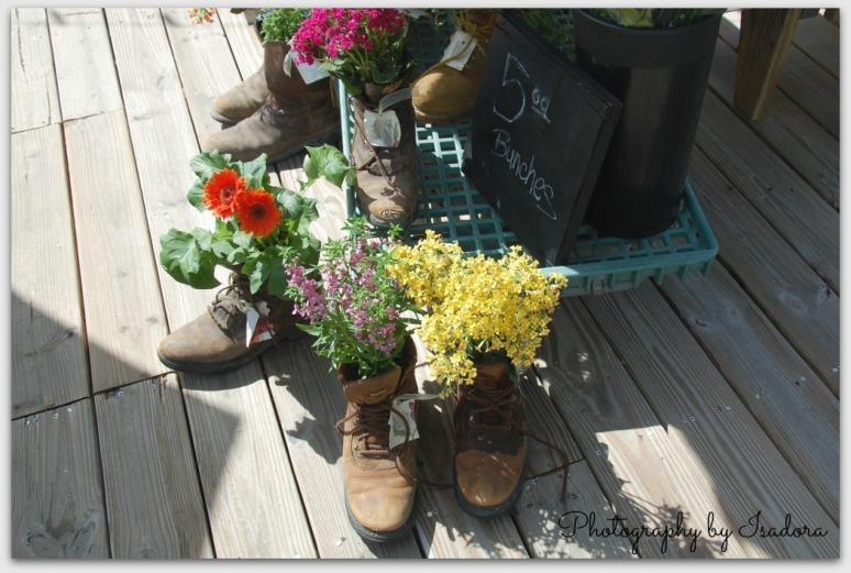 Shoe Planters.web