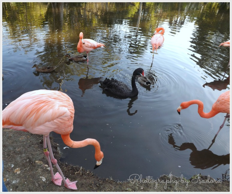 Flamingo 2.web
