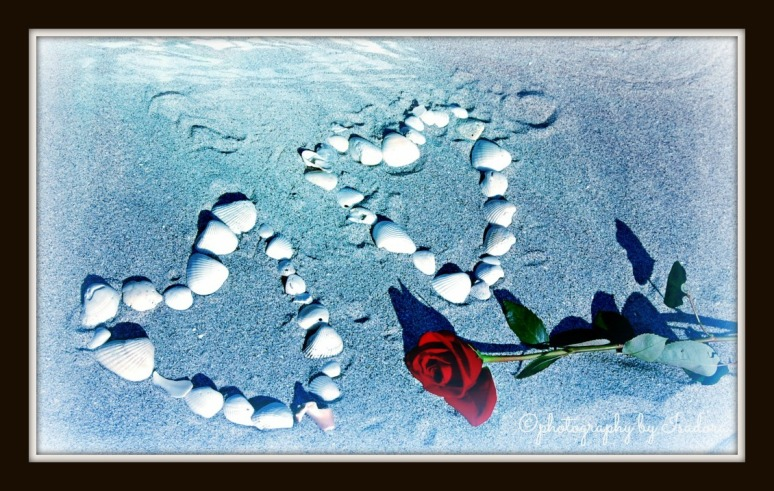 Rose - two shell hearts blue2.web