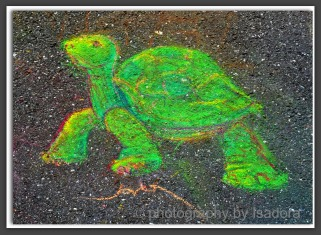 Street Art turtle.web