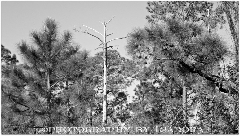 Leafless Tree black-white.web