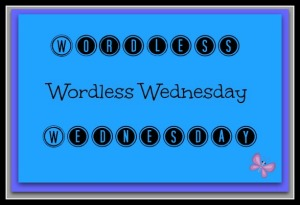 Wordless Wednesday 1.web