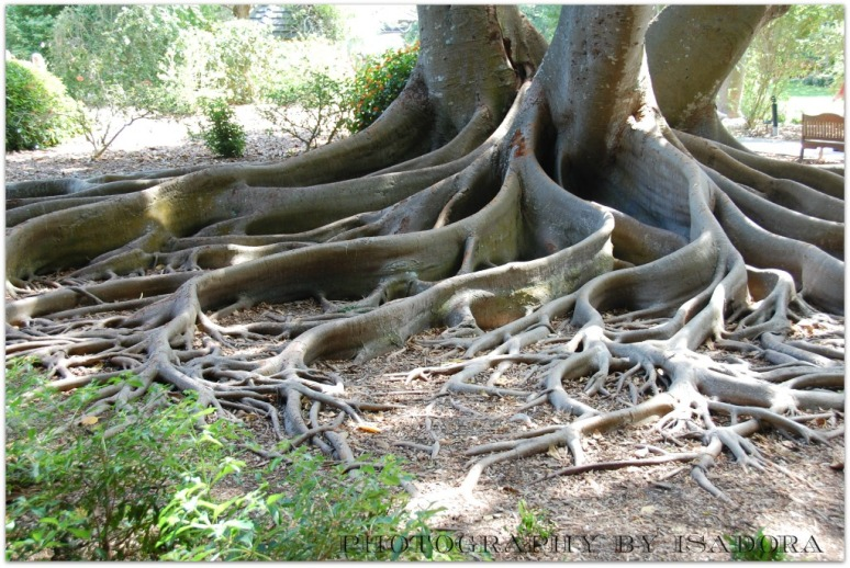 BANYAN ROOTS 1.WEB