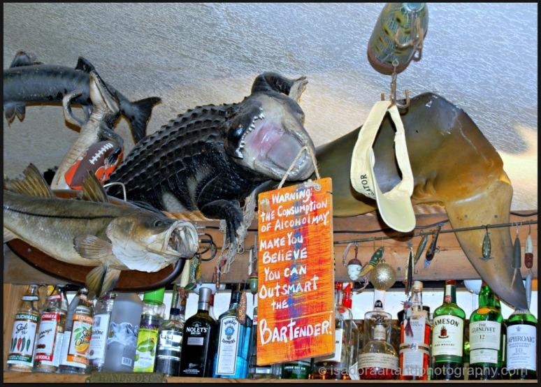 Bar - Alligator.web