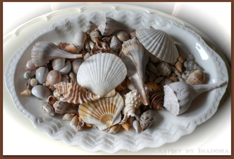 Beach Seashells 1.web