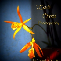 Exotic Orchid Photography Book