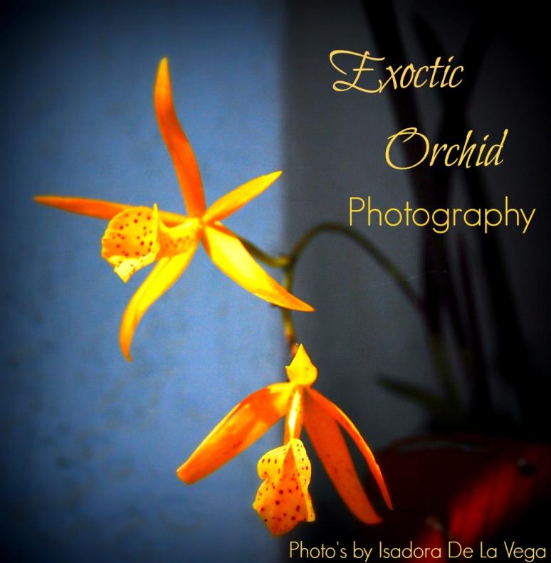 FlowerYellow Orchids.web