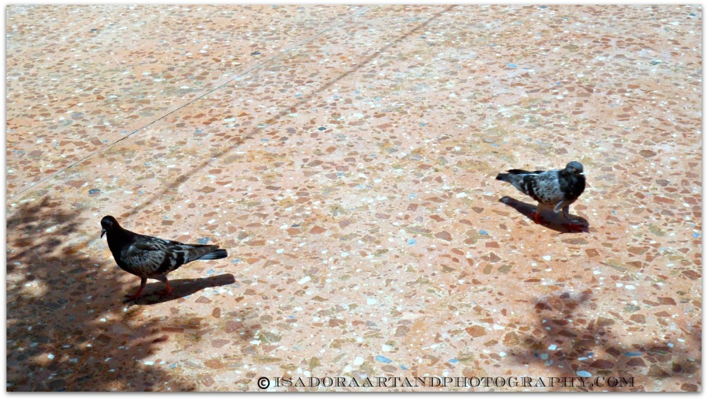 Park Pigeons.web