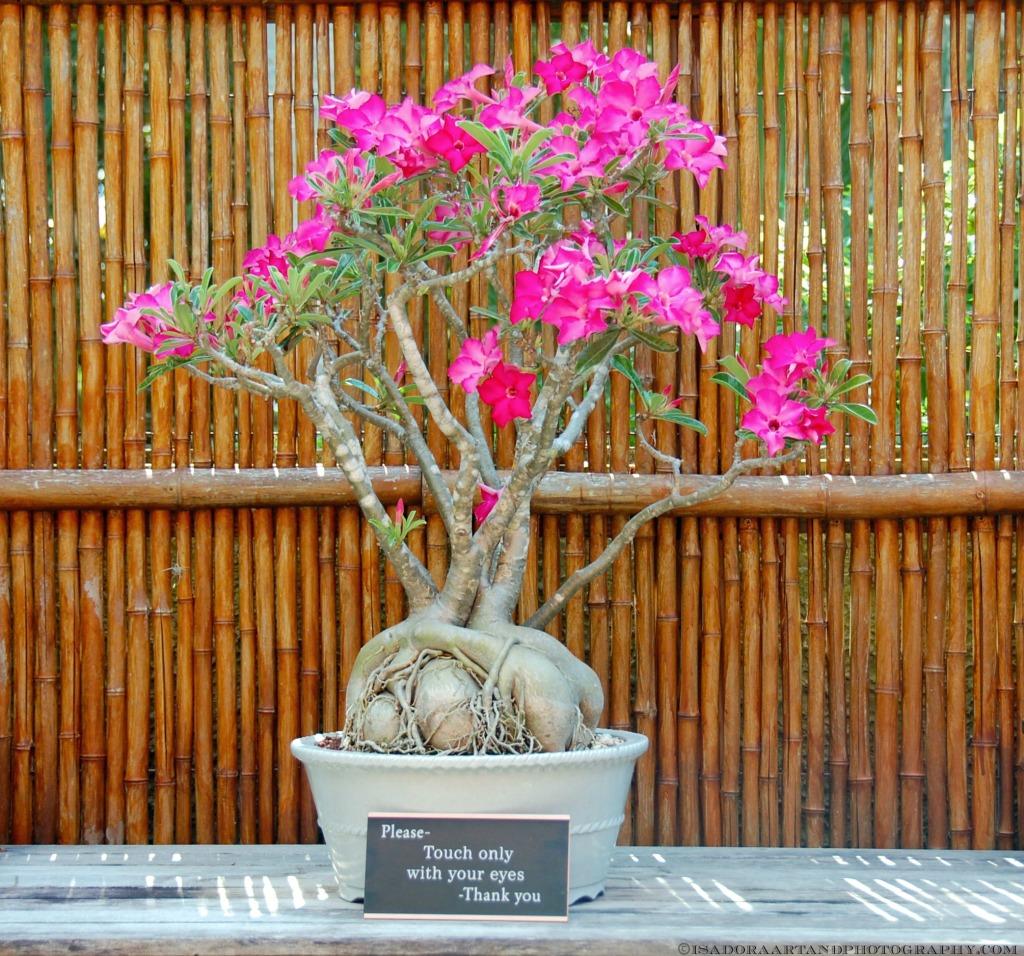 Flower Bonsai AA-pink.web
