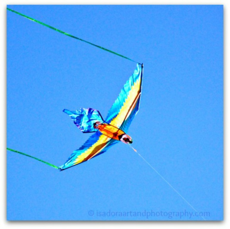 Bird blue kite Bb.web