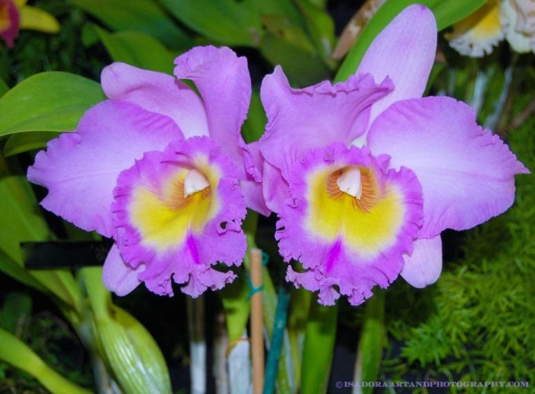 Flower 1024 Lavendar signed.web