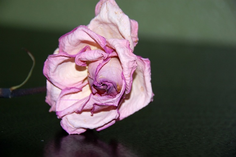 Flower pink 3 ephemeral.web