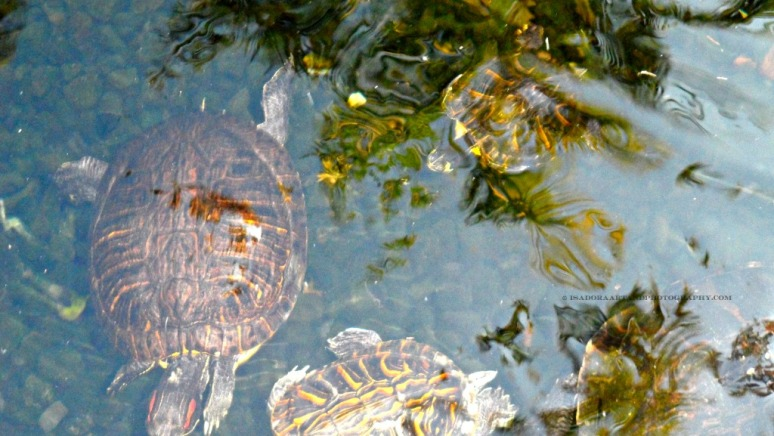 Blur - Turtle 2.web