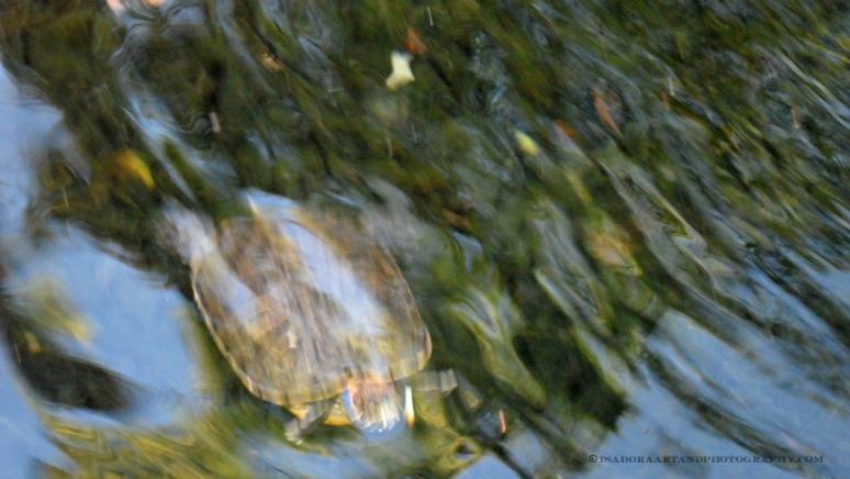 Blur - turtle.web