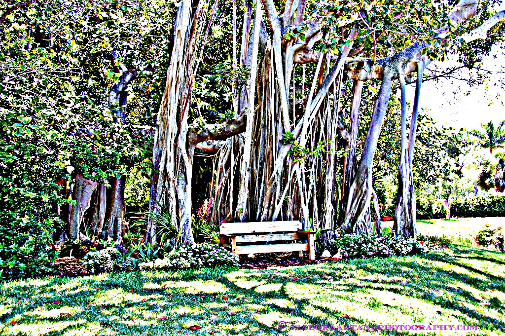 Bench HDR Peaceful Bench.web