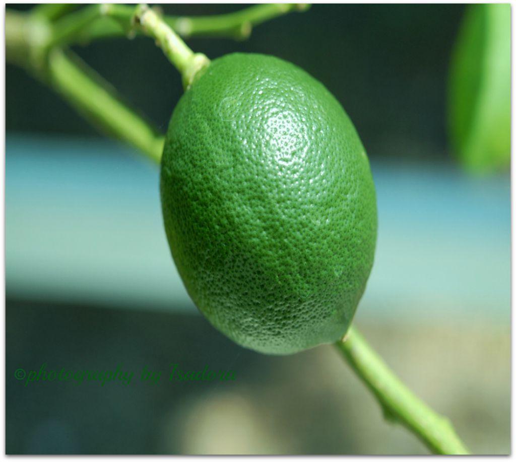 Food meyer-lemon macro.web