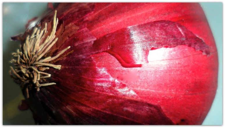 Vegetable Red Onion sideview.web
