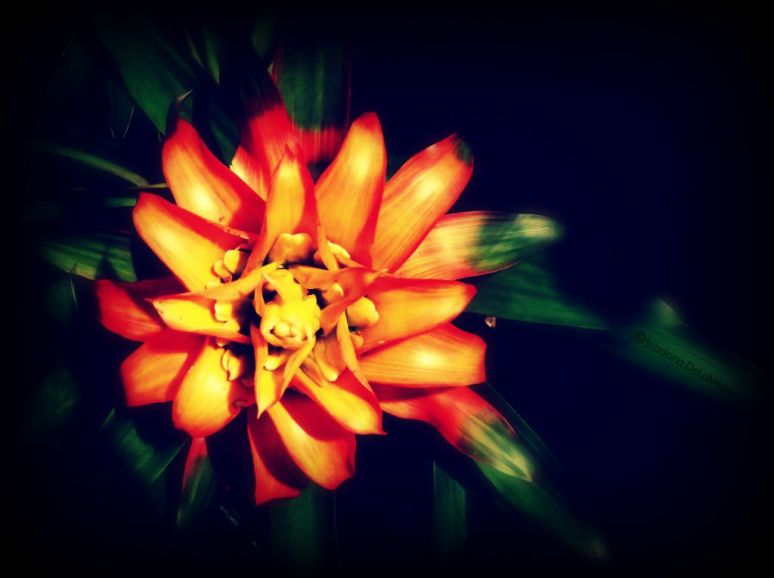 Flower 1024 Plain Card.web