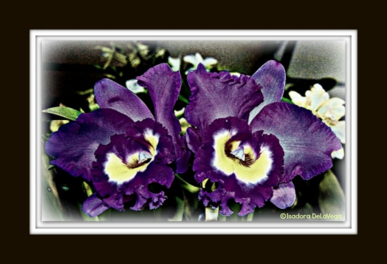 Flower Purple BF 1024 Orchid S.web