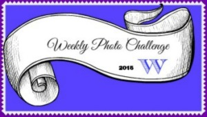 Badge photo 2016 WordPress.web