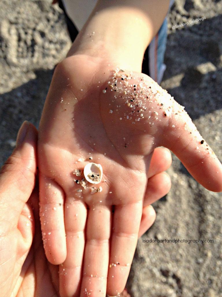 Jeffrey's-Hand-1024-Shell-IMG_8373.web