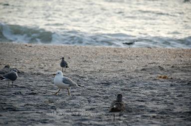 Sky 1024S Seagulls.web