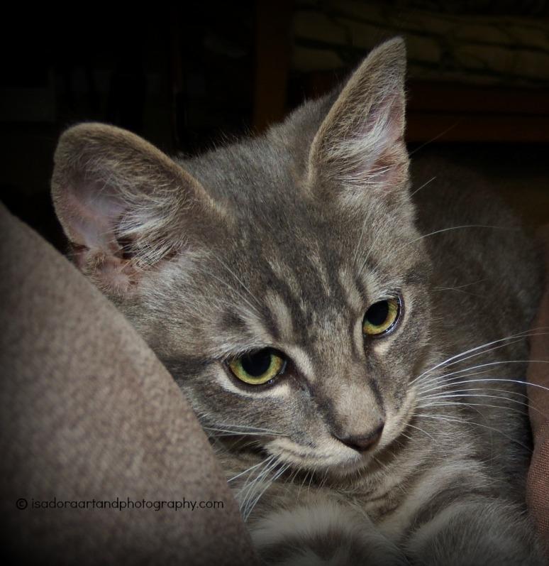 Cat - Pelu - close up.web
