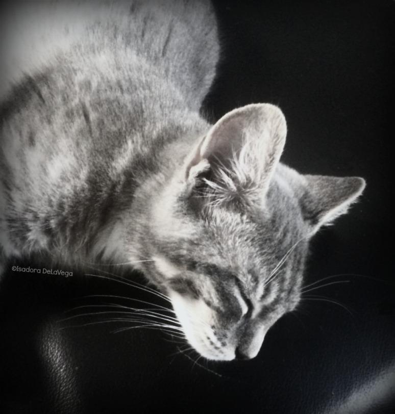 Cat Pelu Sleeping.web