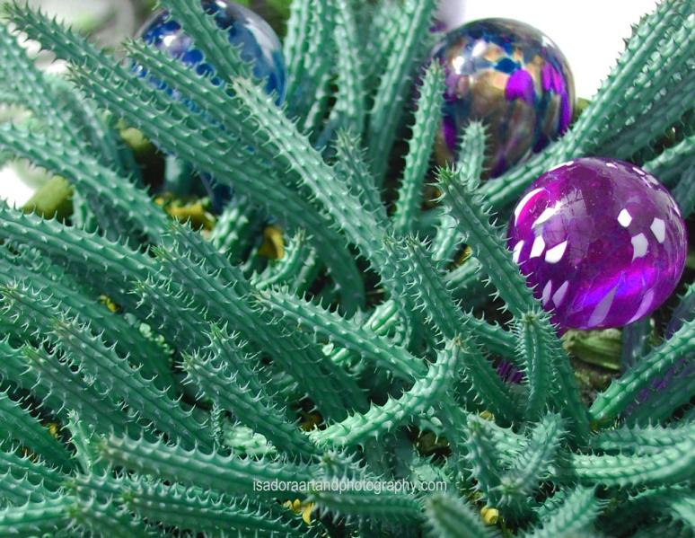 Flower-Cactus-PSS.web