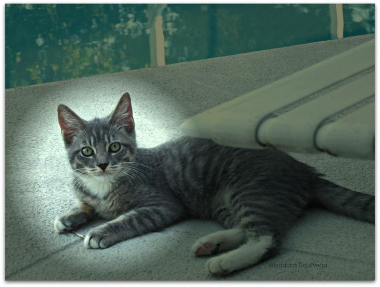 Cat King Pelu lounging.web