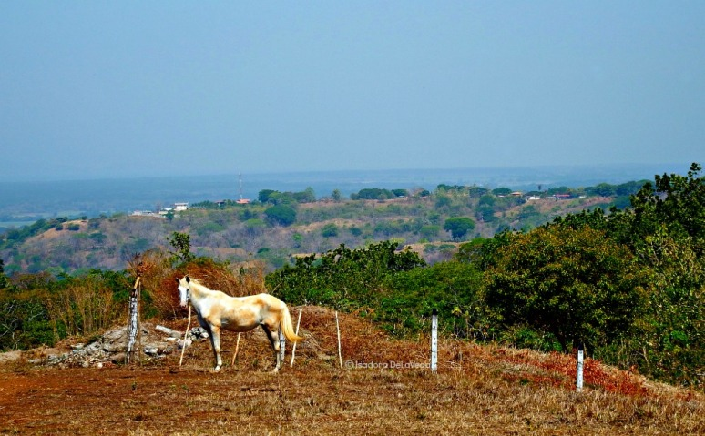 Cruise Costa Rica - horse.web