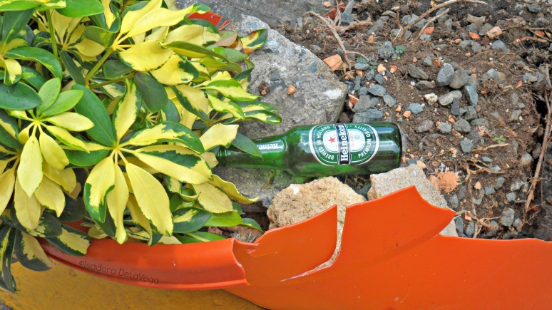 art-puerto-rico-ps-planter-with-beer-we-b