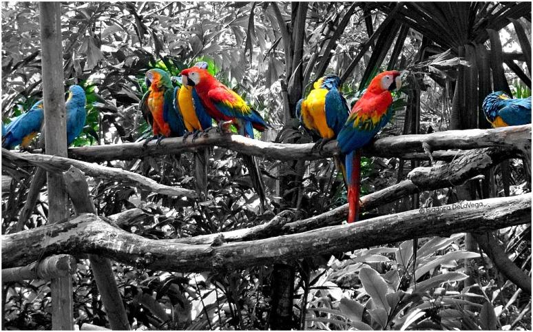 animals-macaws-web
