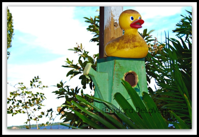 art-duckie-web