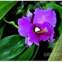 Various Purple Colors