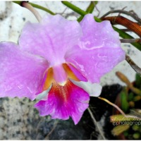 Flower of the Day - 32