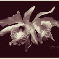 B & W Flowers