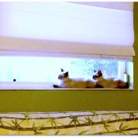 Lens-Artists Challenge - Precious Pets