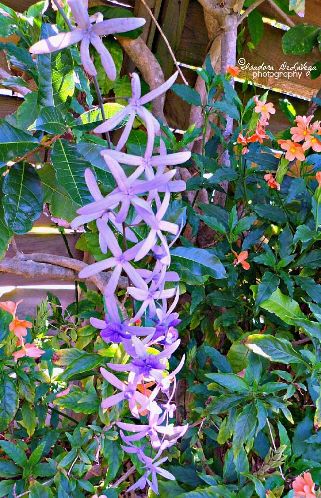 Flower Blue-long branch.web