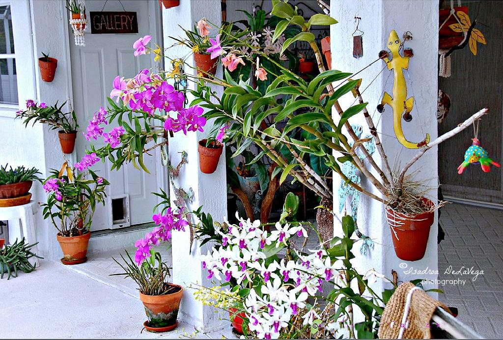 Flower - garden of orchids.web